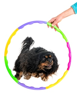Agilidade e cachorrinho