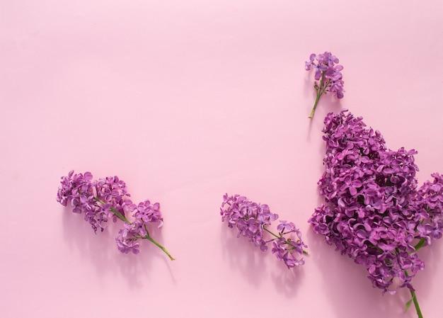 Aglomerados de lilás de cor roxa brilhante encontram-se em uma vista superior do plano de fundo rosa. clima de primavera
