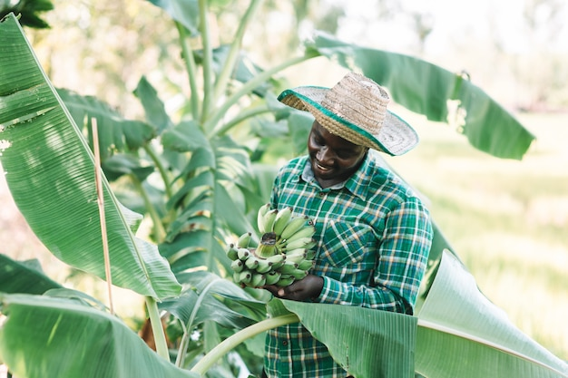 Agricultor africano segurando banana na fazenda orgânica