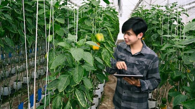 Agricultor agrônomo de homem verificando a qualidade pelo tablet em casa verde.