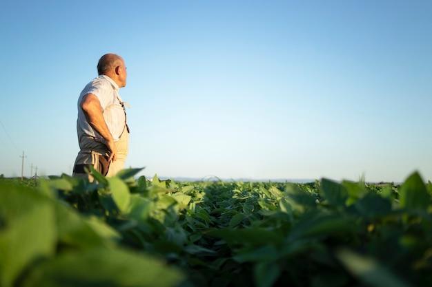 Agricultor agrônomo sênior em um campo de soja observando e verificando as colheitas antes da colheita