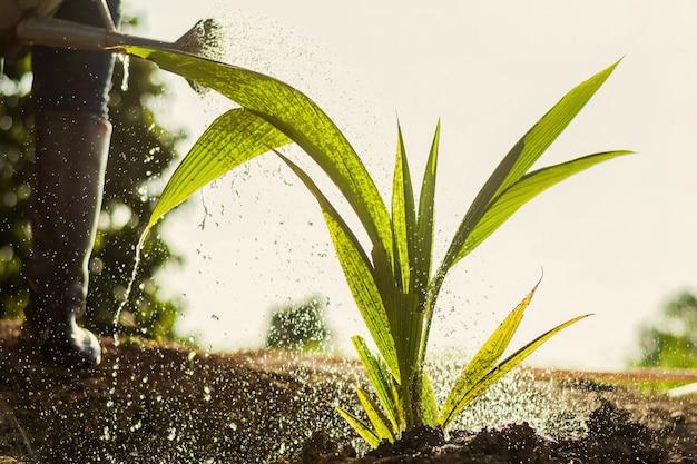 Agricultor, aguando, palma, árvore, em, jardim