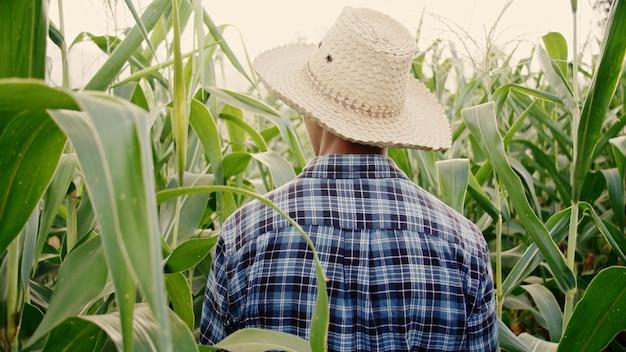 Agricultor anda ao redor de sua fazenda de milho para verificar seu produto, o conceito de agricultura.