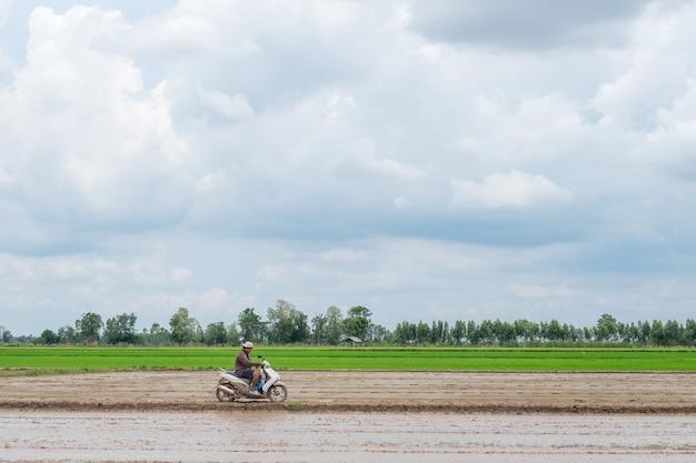 Agricultor anda de moto em paisagem ao ar livre de fazenda de arroz verde