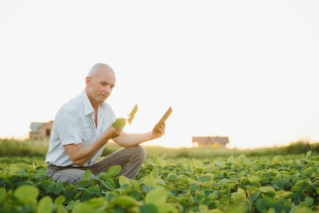 Agricultor arquivado segurando o tablet e examinando o corp de soja