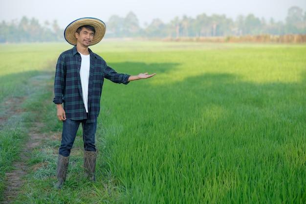 Agricultor asiático com chapéu de homem em pé e posando em uma fazenda de arroz verde