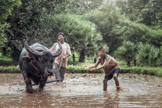 Agricultor asiático e filho trabalhando com seu búfalo