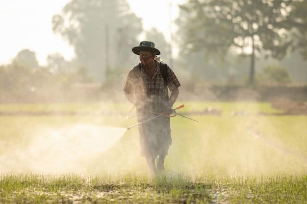 Agricultor asiático pulverização de fertilizantes para o campo de arroz verde jovem
