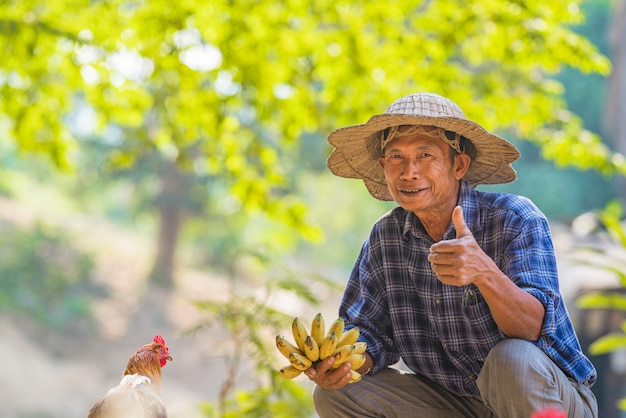 Agricultor asiático segurando banana em uma horta agrícola