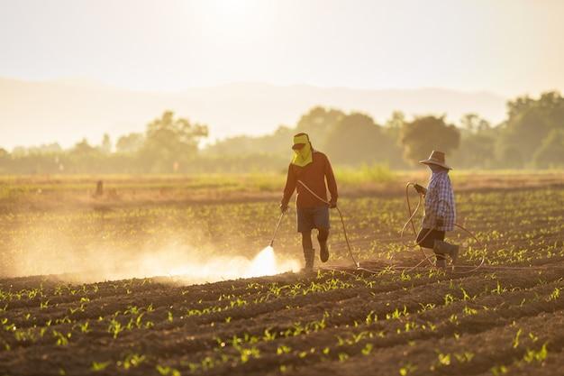 Agricultor asiático trabalhando no campo e pulverização de produtos químicos