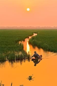 Agricultor asiático trabalhando sob o pôr do sol