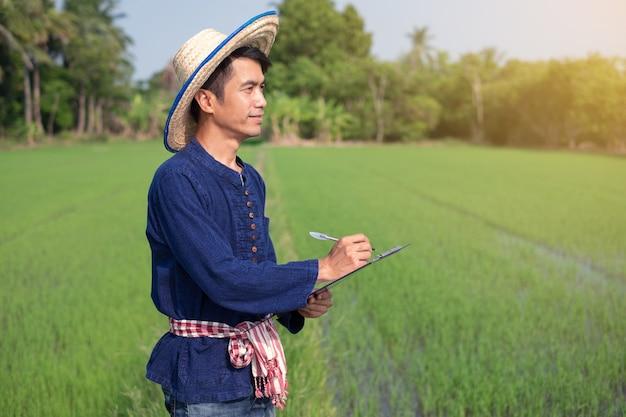 Agricultor asiático usa traje tradicional em pé e escrevendo papelão na fazenda de arroz verde