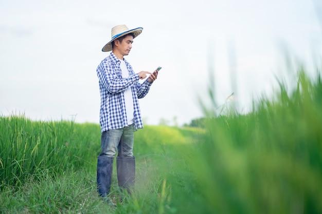 Agricultor asiático usando smartphone em uma fazenda de arroz verde