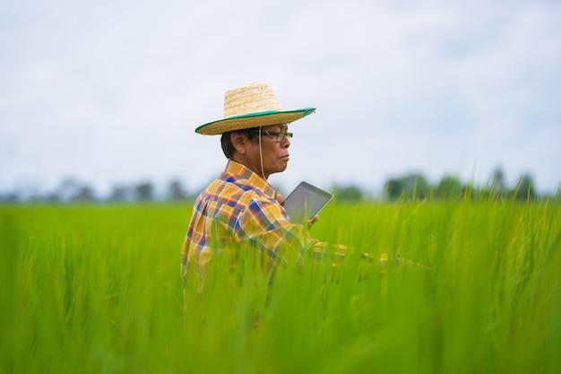 Agricultor asiático usando tablet digital em um campo de arroz verde, conceito de agricultura de tecnologia inteligente