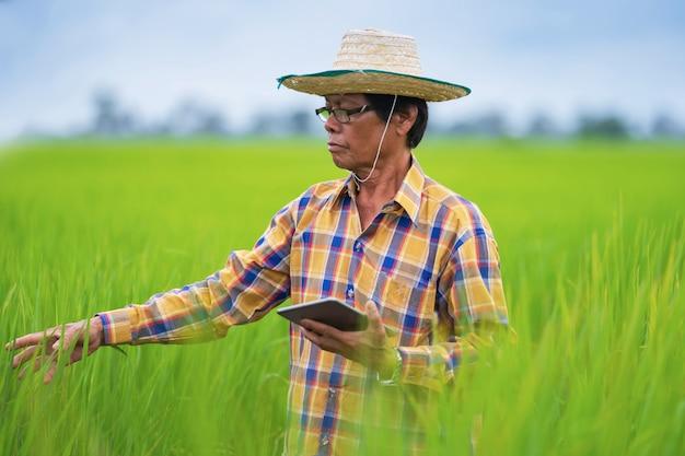 Agricultor asiático usando tablet digital em um campo de arroz verde