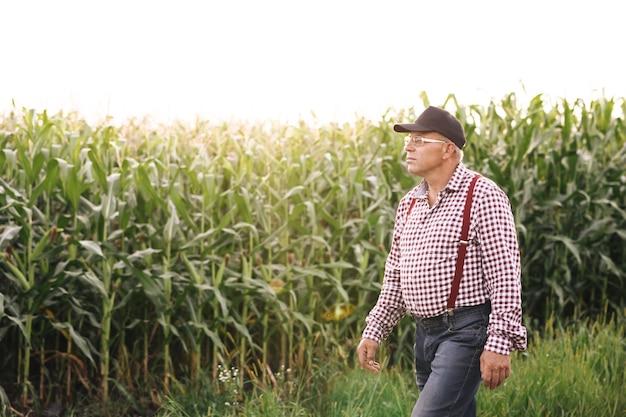 Agricultor caminha por uma estrada de terra entre campos agrícolas de milho na colheita em câmera lenta do pôr do sol