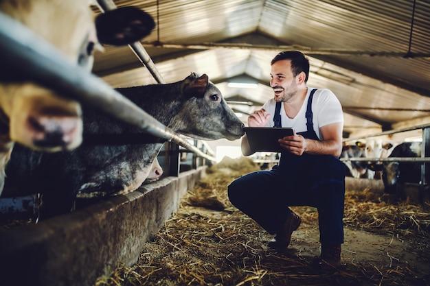 Agricultor caucasiano bonito em geral agachado ao lado de bezerro, usando o tablet e sorrindo. interior estável.