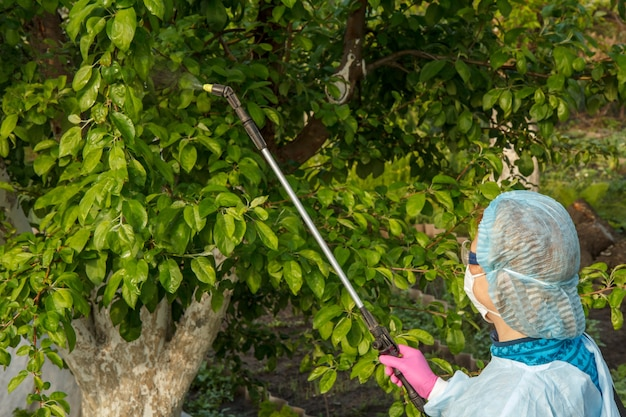 Agricultor com roupa de proteção está pulverizando macieiras contra doenças fúngicas ou vermes com pulverizador de pressão e produtos químicos no pomar.