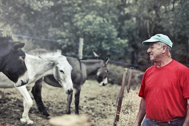 Agricultor com seus burros