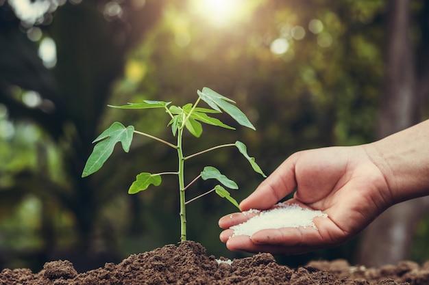 Agricultor, dar, fertilizante, árvore jovem, em, jardim
