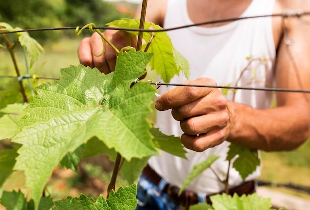 Agricultor de close-up, trabalhando na videira
