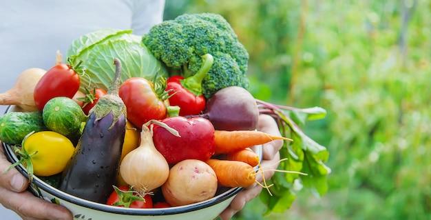 Agricultor de homem com legumes caseiros nas mãos dele.