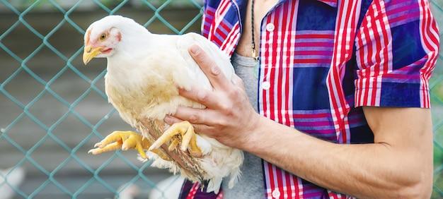 Agricultor de homem segurando uma galinha nas mãos.
