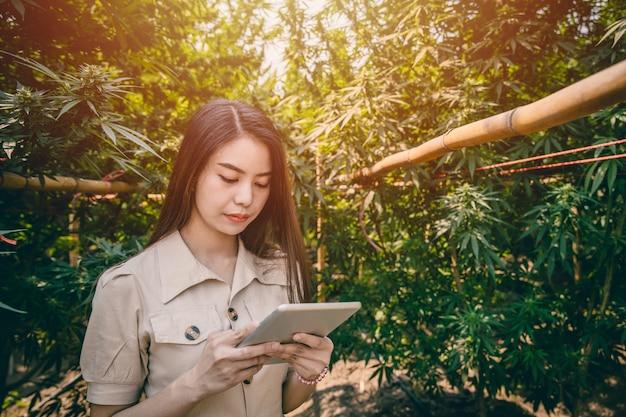 Agricultor de maconha jovem inteligente usando tecnologia moderna de tablet para monitorar a plantação de maconha ou cânhamo de controle.