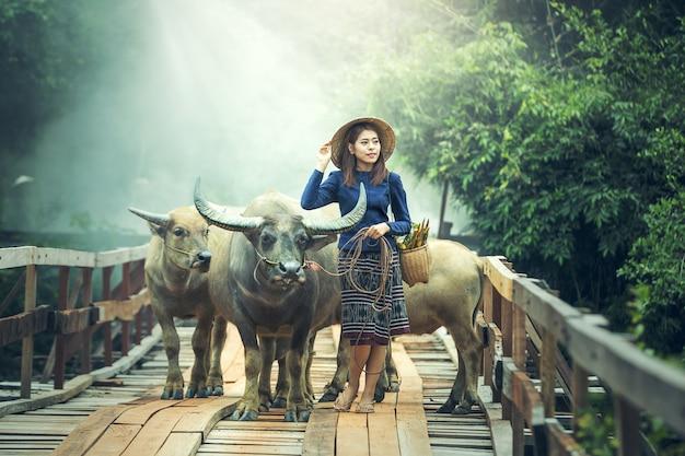 Agricultor de mulher asiática com um búfalo