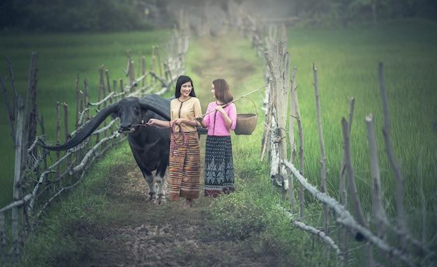 Agricultor de mulher asiática (tailandês) com um búfalo no campo