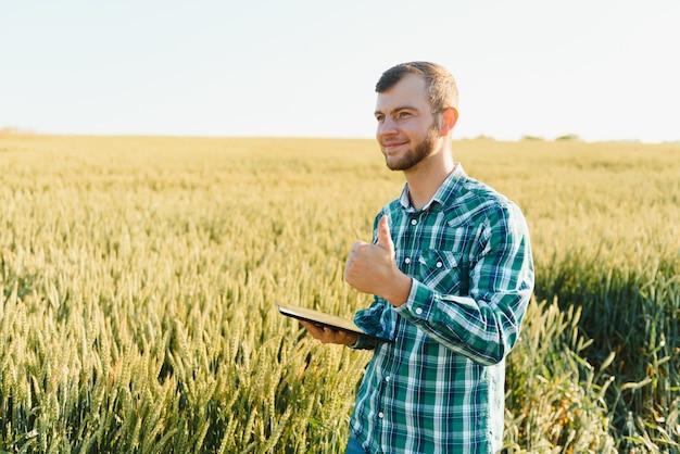 Agricultor em um campo de trigo verde com um tablet nas mãos. fazenda inteligente. fazendeiro verificando suas colheitas em um campo agrícola. amadurecimento de espigas de campo de trigo. o conceito de negócio agrícola.