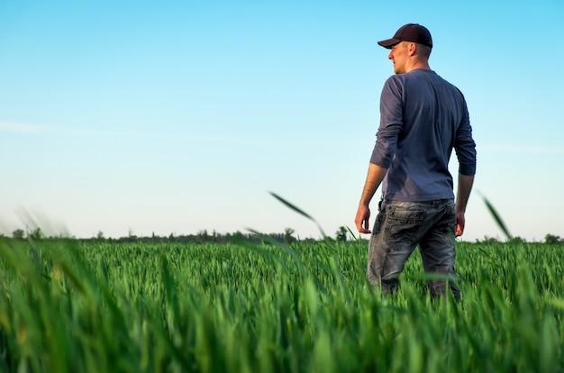 Agricultor em um campo de trigo verde.