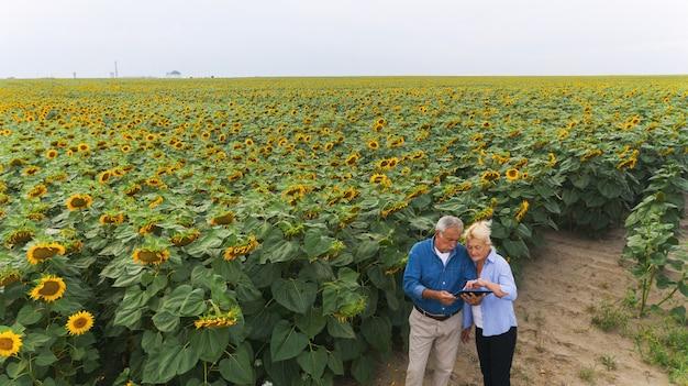 Agricultor engenheiro agrônomo de homem com computador tablet digital em um campo de girassol usando apps. tecnologias modernas na agricultura