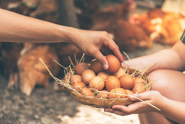 Agricultor está ajudando a coletar produtos de ovos frescos coloque em uma cesta de bambu.