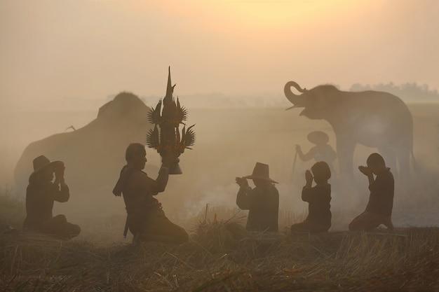 Agricultor fazendo cerimônia de colheita no campo de arroz com elefantes