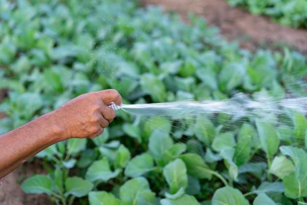 Agricultor homem mão segurando irrigador de jardim para regar vegetais no conceito de fazenda orgânica agrícola