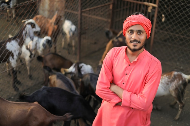 Agricultor indiano em fazenda de gado leiteiro