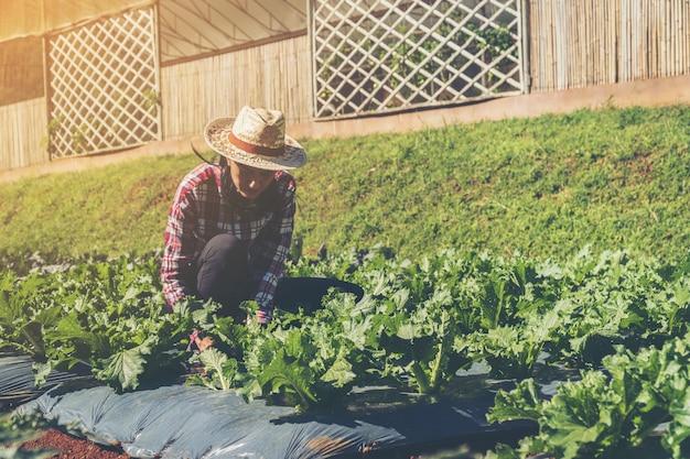 Agricultor inteligente e conceito de produtos vegetais; jardineiro feminino, verificando recentemente plantas na fazenda
