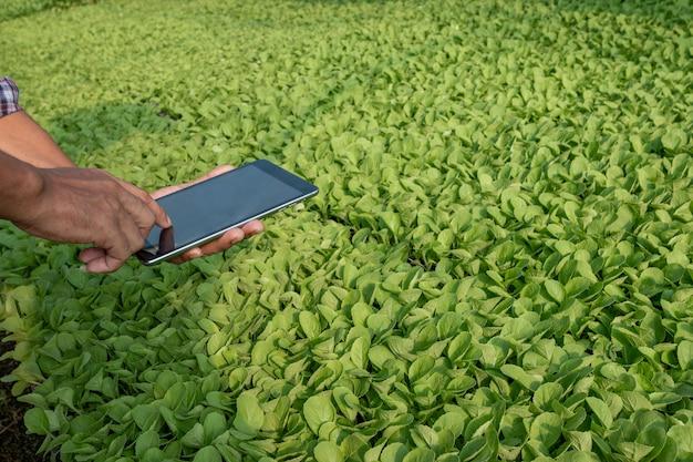 Agricultor inteligente segurar um tablet no campo de arroz. agricultura inteligente e conceito de agricultura digital