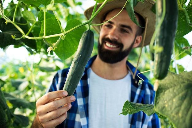 Agricultor jovem barbudo cultivando e verificando vegetais na estufa