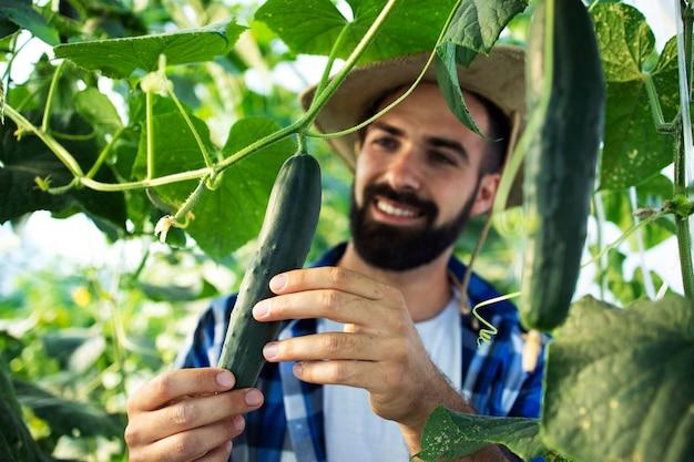 Agricultor jovem barbudo observando e verificando a qualidade dos vegetais na estufa
