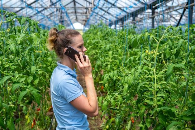 Agricultor ligando em uma estufa em uma fazenda orgânica cultivando tomates