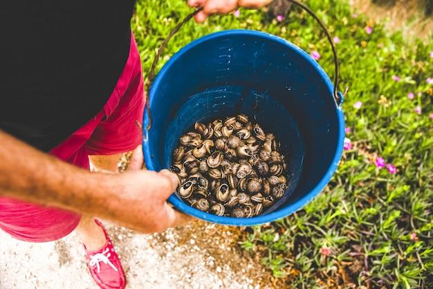 Agricultor mostra um balde cheio de caracóis colhidos para cozinhá-los.