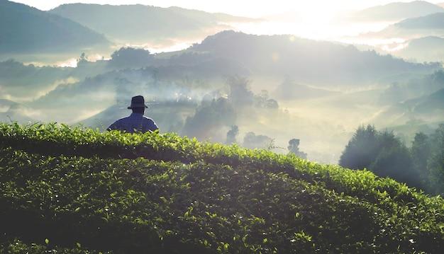 Agricultor na plantação de chá na malásia