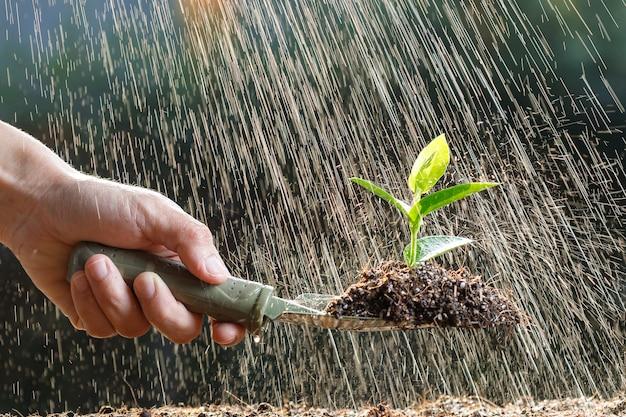 Agricultor plantando brotos jovens em solo fértil e regando.