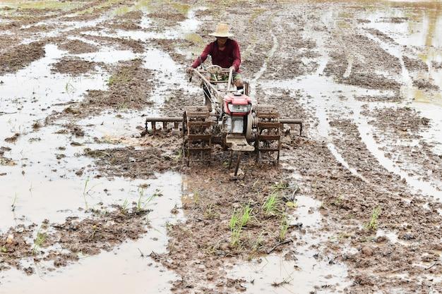 Agricultor, ploughing, em, campo arroz, preparar, planta, arroz, sob, luz solar