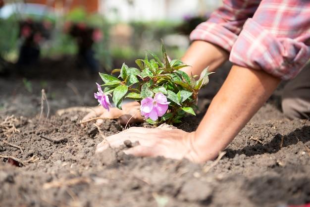 Agricultor preparando flores para a agricultura