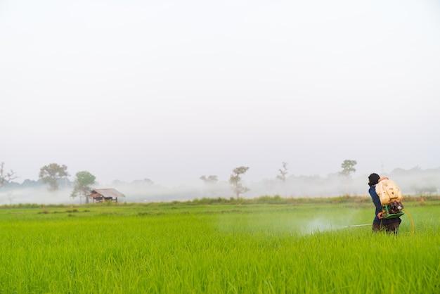 Agricultor pulverizando pesticida no campo de arroz