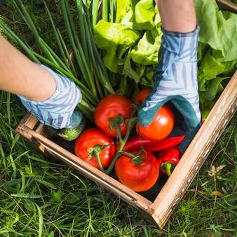 Agricultor segurando a caixa com legumes orgânicos frescos