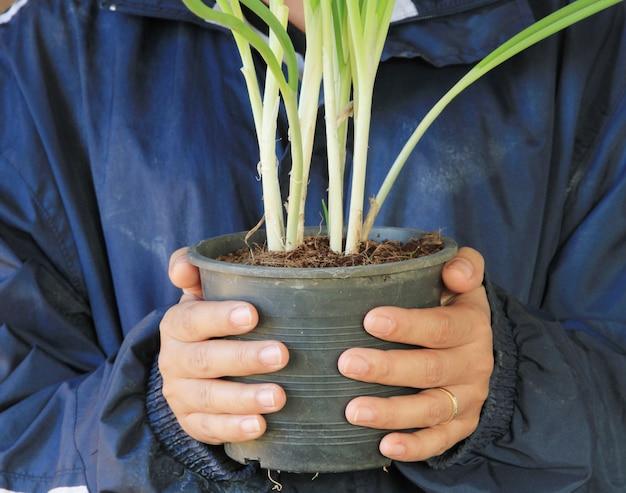 Agricultor segurando cebolinha no vaso de flores.